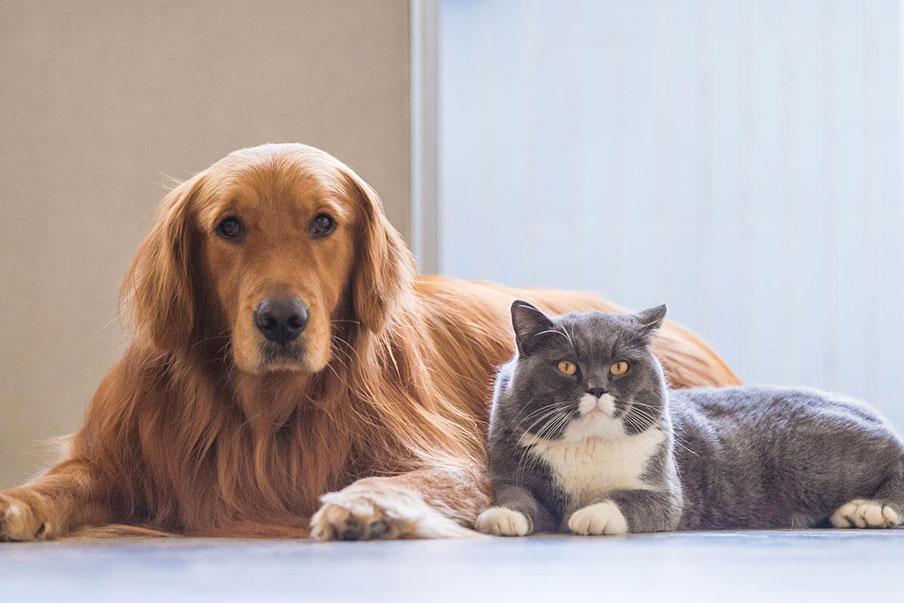 fb8f4283f4c0 Σκύλος και γάτα! Πως θα γίνουν δυο καλά φιλαράκια